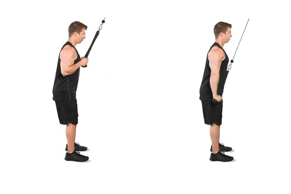 cable-rope_tricep_pushdown.jpg