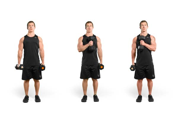Dumbbell Bicep Exercises Daily Spot